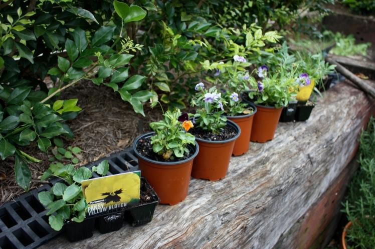 Seedling Planting | brownpaperbelle.com