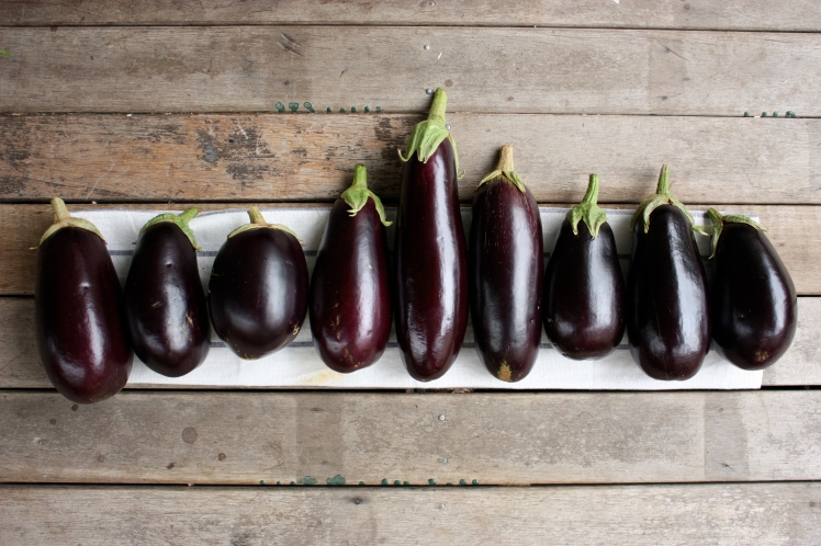 Eggplants | brownpaperbelle.com