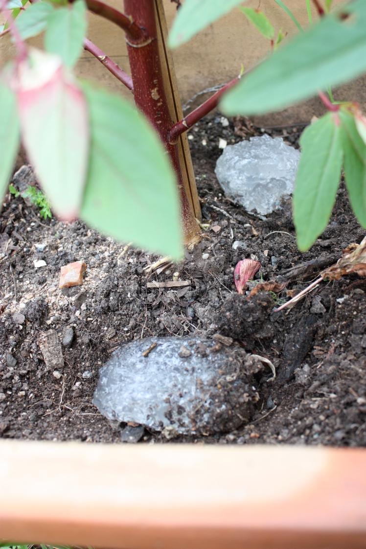 Water Crystals in Garden | brownpaperbelle.com