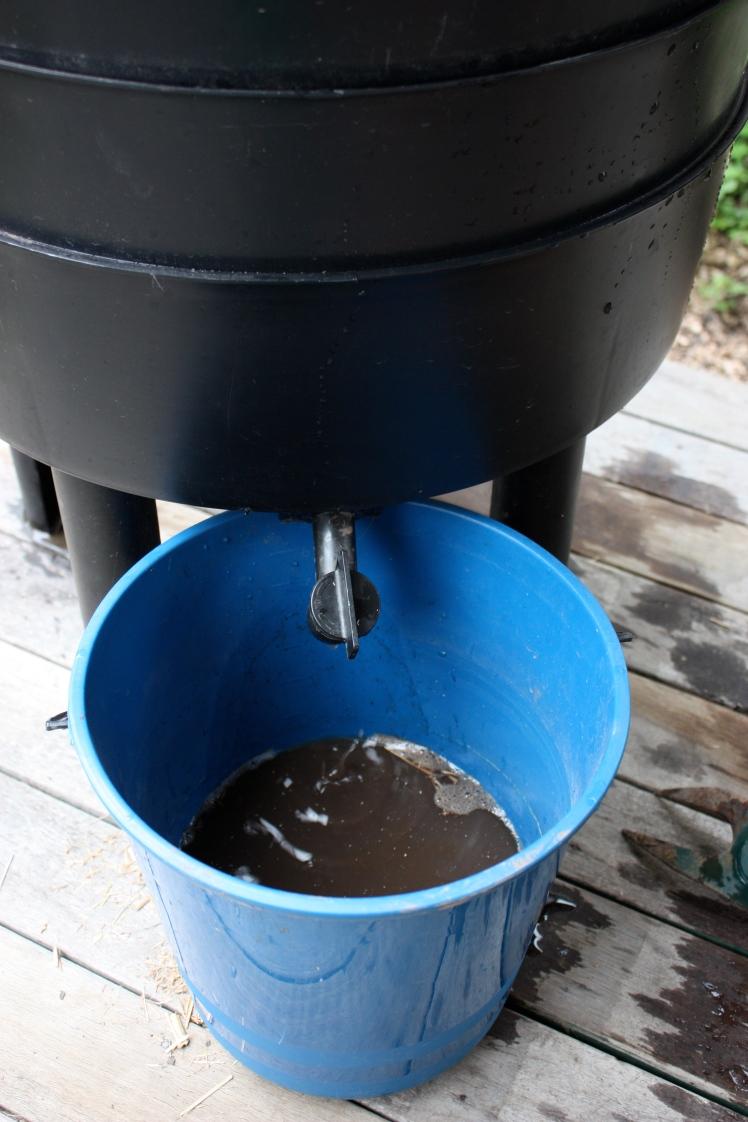 Worm Tea | brownpaperbelle.com