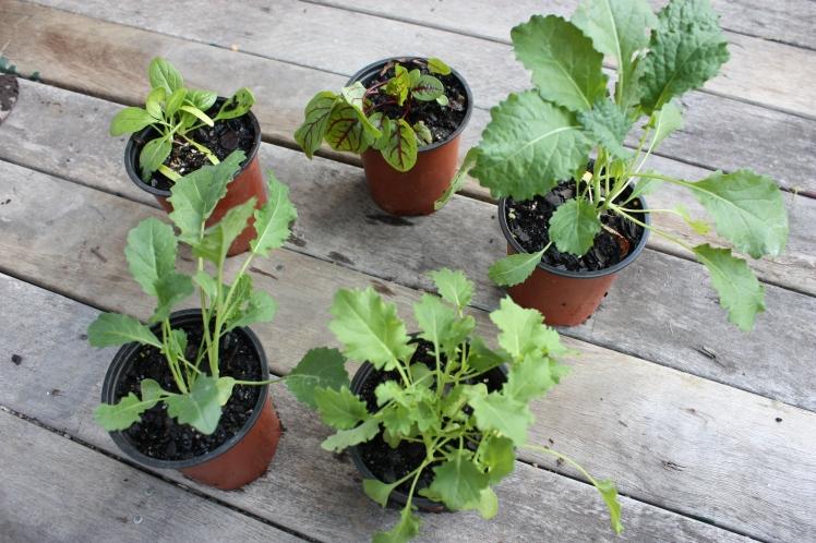 Winter Planting | brownpaperbelle.com