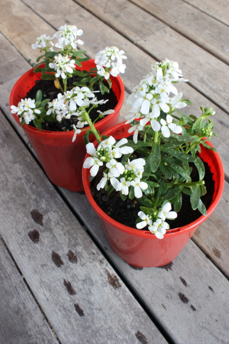 Flower Pots   brownpaperbelle.com