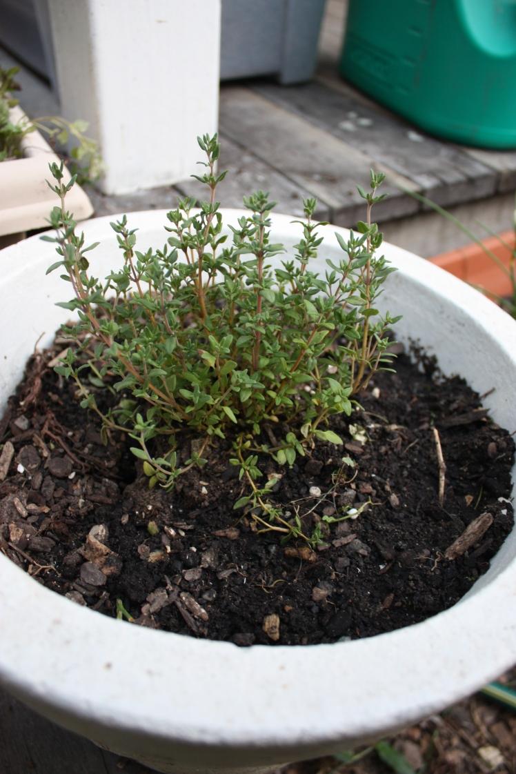 Spring Planting | brownpaperbelle.com