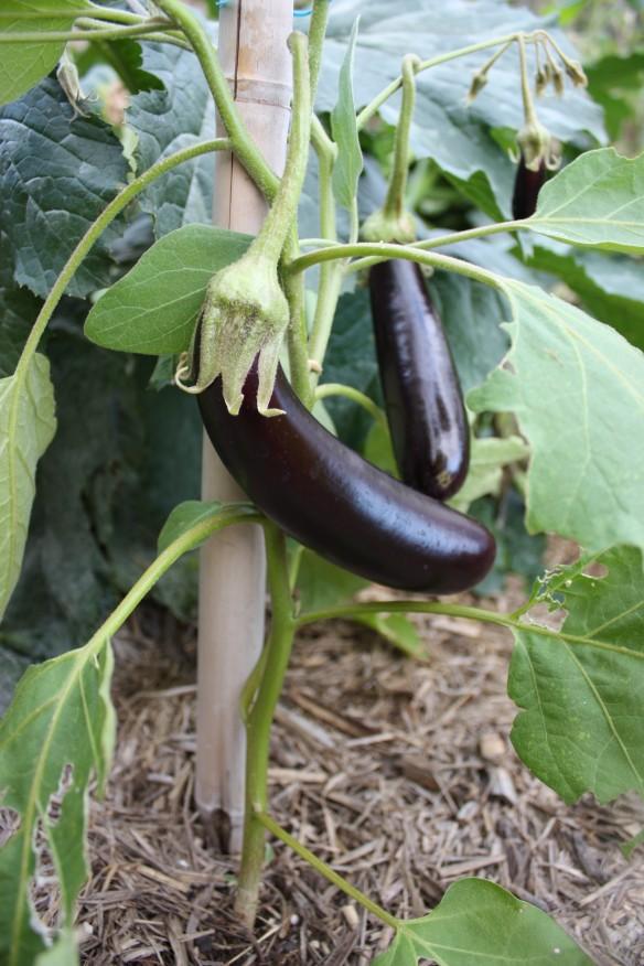 Garden Update | brownpaperbelle.com