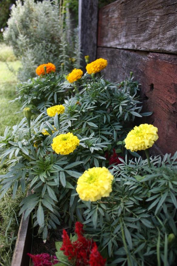 Garden Share Collective, February | brownpaperbelle.com